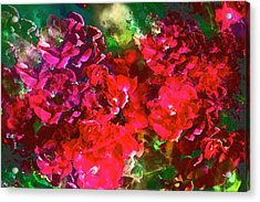 Rose 143 Acrylic Print by Pamela Cooper