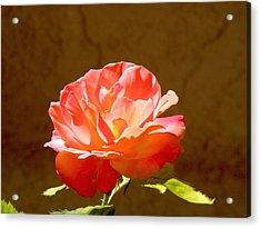 Rose Acrylic Print by FeVa  Fotos
