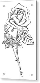 Rose, Lino Print Acrylic Print by Gary Hincks