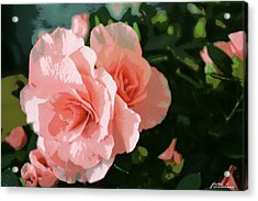 Roses Are Pink Acrylic Print by Fern Korn
