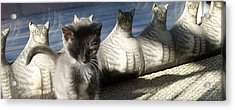 Rosie And Friends Acrylic Print by Barbara McGeachen