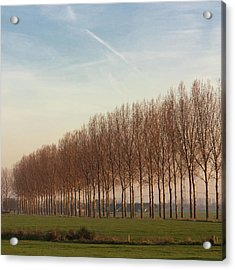Row Of Trees Against Blue Sky Acrylic Print by Leentje photography by Helaine Weide