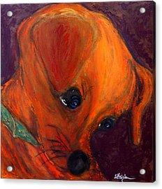 Roxie's New Portrait Acrylic Print by Laura  Grisham