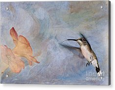 Ruby Throated Hummingbird 2 Acrylic Print by Betty LaRue