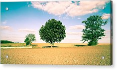 Rural Scene Acrylic Print by Tom Gowanlock