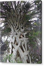 Sabal Palm Acrylic Print by Christy Usilton