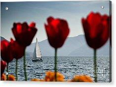 Sailing Boat And Tulip Acrylic Print by Mats Silvan