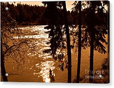 Salmon Is Running 2 Acrylic Print by Tanya  Searcy
