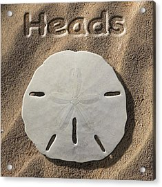 Sand Dollar Heads Acrylic Print by Mike McGlothlen