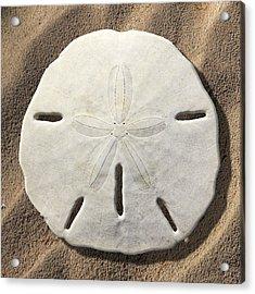 Sand Dollar Acrylic Print by Mike McGlothlen