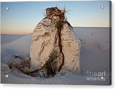 Sand Pedestal With Yucca Acrylic Print by Greg Dimijian