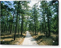 Sand Road Through The Pine Barrens, New Acrylic Print by Skip Brown