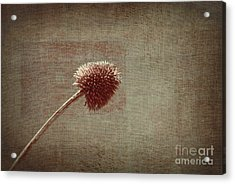 Sans Nom - S03p11t05 Acrylic Print by Variance Collections