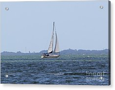 Sarasota Sailing Acrylic Print by Theresa Willingham