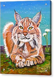 Sassy Lynx And Dandelions Acrylic Print by Phyllis Kaltenbach