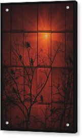 Scarlet Silhouette Acrylic Print by Tom York Images