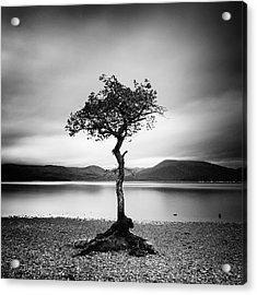 Scotland Milarrochy Tree Acrylic Print by Nina Papiorek