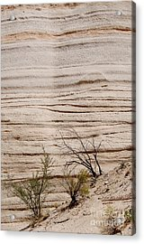 Sculpted By Nature Acrylic Print by Vicki Pelham