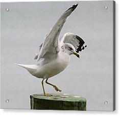 Sea Gull Dance Acrylic Print by Paulette Thomas