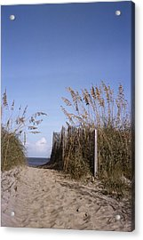 Sea Oats Line The Path Acrylic Print by Taylor S. Kennedy