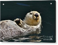 Sea Otter Acrylic Print by Sean Griffin