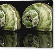 Sea Shells Photography Still Life Acrylic Print by Ann Powell