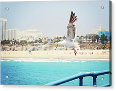 Seagull Flying Acrylic Print by Libertad Leal Photography
