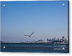 Seagull Flying Over San Francisco Bay Acrylic Print by David Buffington
