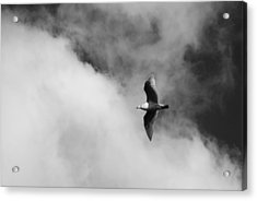 Seagull In The Clouds Acrylic Print by Twenty Two North Photography