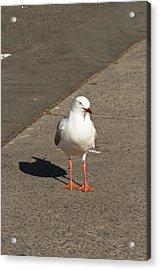 Seagull In The Summer Sun Acrylic Print by Ulrich Schade