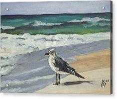 Seagull Acrylic Print by Kim Selig