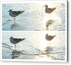 Seagulls In A Shimmer Two Views By Olivia Novak Acrylic Print by Olivia Novak
