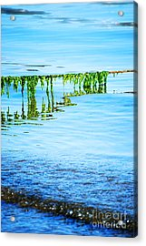 Seaweed Acrylic Print by HD Connelly