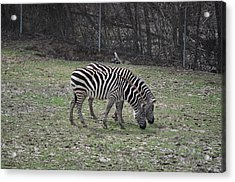 Seeing Double Acrylic Print by Tammy Price