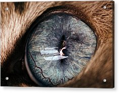 Self Portrait Through The Eyes Of Oliver Acrylic Print by Paul Madura