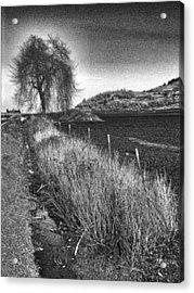 Shaggy Tree Acrylic Print by Bonnie Bruno