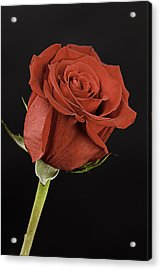 Sharp Red Rose On Black Acrylic Print by M K  Miller
