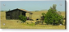 Shed In A Field Of Gold Acrylic Print by Grace Dillon