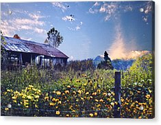 Shed In Blue Sky Acrylic Print by Walt Jackson