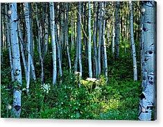 Shedding Light Acrylic Print by Nick Pantuso