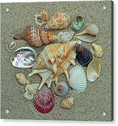 Shell Collection 2 Acrylic Print by Sandi OReilly
