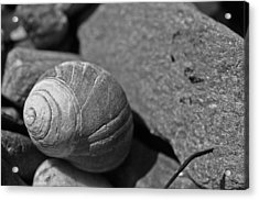 Shells II Acrylic Print by David Rucker