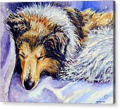 Sheltie Napster Acrylic Print by Lyn Cook