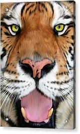 Sherekhan Acrylic Print by Big Cat Rescue