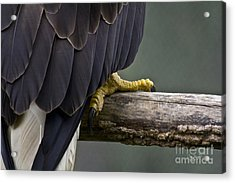 Shock And Awe - Artist Cris Hayes Acrylic Print by Cris Hayes