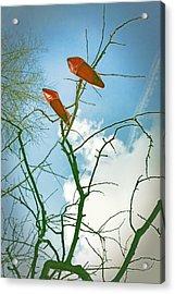 Shoes In The Sky Acrylic Print by Joana Kruse