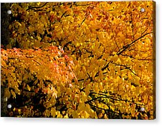 Showing Off Acrylic Print by Rich Franco