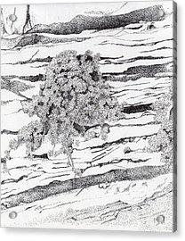 Shrub In Sedimentary Rock Acrylic Print by Inger Hutton