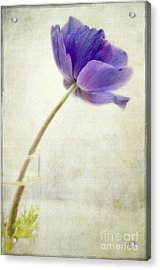 Shy Anemone Acrylic Print by Marion Galt