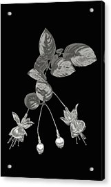 Silver Fuchsia Flowers On A Black Background Acrylic Print by Mike Hill
